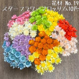 花材 No.19 スターフラワー・ブロッサム10色セット(ドライフラワー)