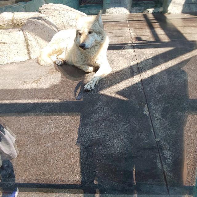 LONGCHAMP(ロンシャン)のkayo‐rin様、専用❤️❤️❤️ レディースのバッグ(トートバッグ)の商品写真
