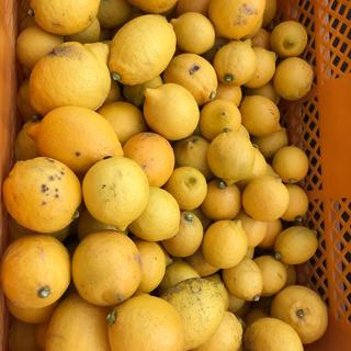 広島県産 訳あり 果汁用レモン 9〜10キロ 送料無料