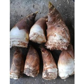30日採れたて 筍 タケノコ 竹の子 新鮮 無農薬 採れたて 愛知産