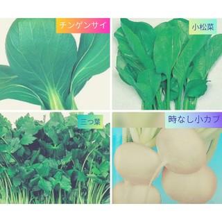 ハーブ・野菜 種子(野菜)