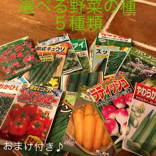 ひろっぺさん専用です 選べる 野菜の種 小分け 5種類(野菜)