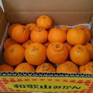 2480円→2280円【🍊訳あり不知火デコ🍊】5キロ箱入り