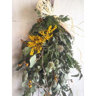 新緑香るユーカリカマルドレンシスのナチュラルグリーンスワッグ(ドライフラワー)