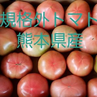 規格外トマト 熊本県産 四キロ入り(野菜)