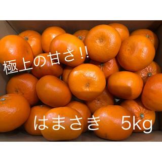 佐賀県産 はまさき 5kg(フルーツ)