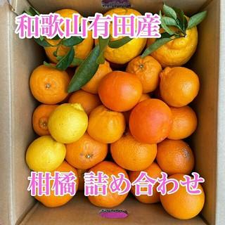 和歌山有田産 柑橘詰め合わせ✳(フルーツ)