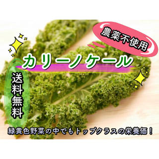 栄養満点スーパーフード! 【カリーノケール】 無農薬野菜 珍しい野菜 緑黄色野菜