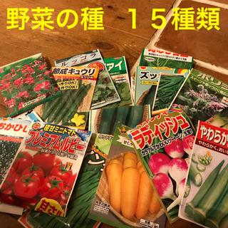選べる 野菜の種 15種類(野菜)