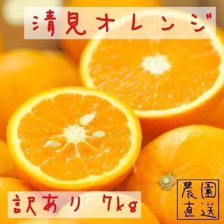 みかん 清見オレンジ 7kg 訳あり(フルーツ)