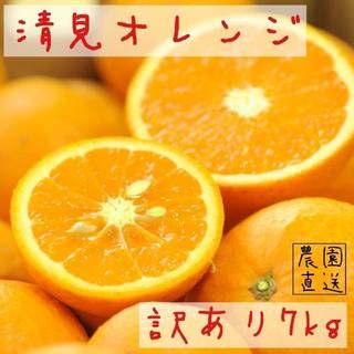 清見オレンジ 7kg 訳あり
