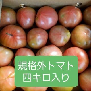 規格外 熊本県産トマト 四キロ入り(野菜)