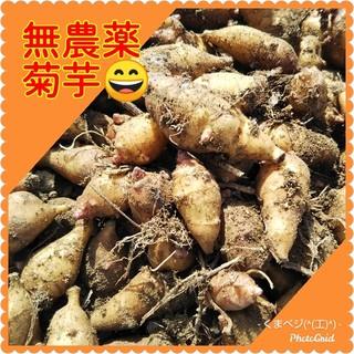 菊芋コンパクト(野菜)