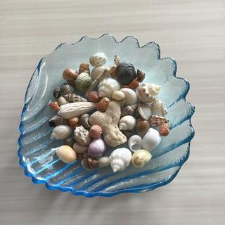 貝殻サンゴおまかせミックス ハンドメイド ヤドカリ宿替え インテリア 工作 飾り(おもちゃ/ペット小物)