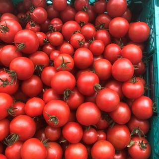 ミニトマト2キロ