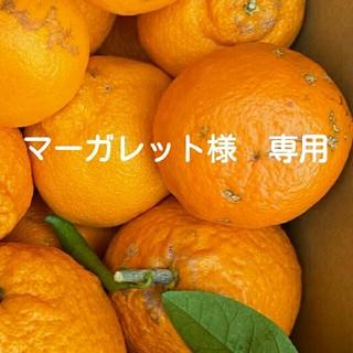 マーガレット様専用です(和歌山有田産 柑橘詰め合わせ 訳あり!)(フルーツ)