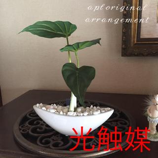 光触媒 人工観葉植物 アロカシア2419