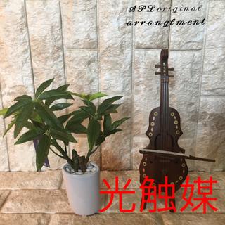 光触媒 人工観葉植物 パキラオーバル2720