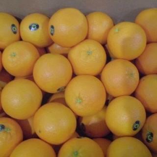 ◆16㎏アメリカ産大玉ネーブルオレンジ(フルーツ)