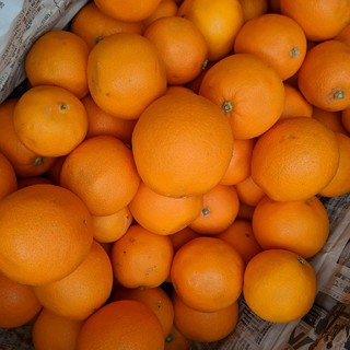佐賀県産 ネーブルオレンジ(フルーツ)