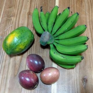 沖縄本島産  台湾系島バナナ、石垣珊瑚他、春のフルーツセット♪(フルーツ)
