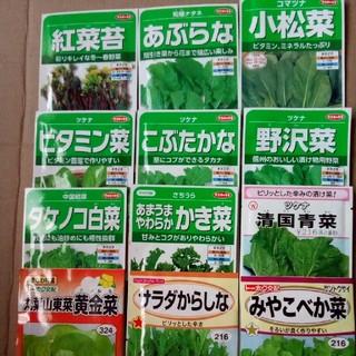 毎日食べたい野菜😊 春まきの野菜の種 6種類セット 小分け🌱 節約に