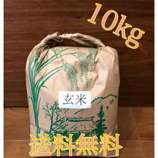 令和元年度産 新米 玄米ヒノヒカリ 10㎏
