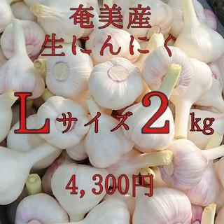 Lサイズ2kg 島にんにく 奄美産(野菜)