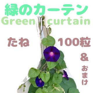 朝顔の種 緑のカーテン グリーンカーテン アースデイ 100粒(その他)