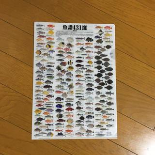 お魚のファイル 魚譜431選 観察図
