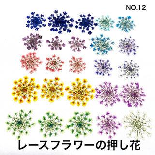 【25枚】レースフラワー の押し花(No.12)(ドライフラワー)