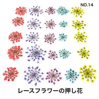 【25枚】レースフラワー の押し花(No.14)(ドライフラワー)
