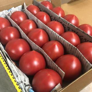 高糖度フルーツトマト とまリッチ 16個〜28個入り