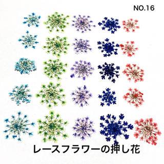 【25枚】レースフラワー の押し花(No.16)(ドライフラワー)