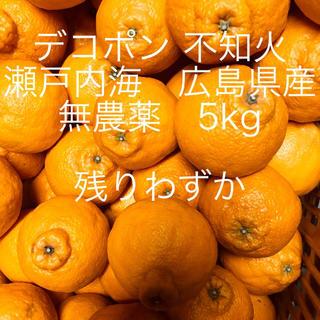 広島県産 デコポン  不知火 無農薬 5kg