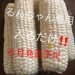 るんちゃん専用ゴールドラッシュとうもろこし入るだけ6月発送予定(野菜)