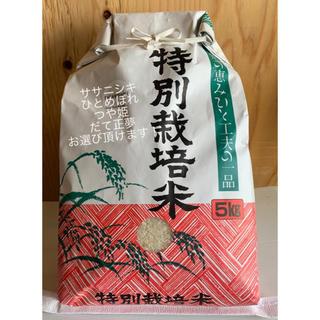ササニシキ 5キロ 精米♡つやつやキラキラなお米をあなたに♡(米/穀物)