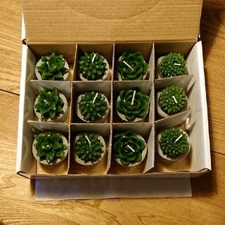 サボテン キャンドル 12個(キャンドル)