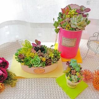 ◆多肉植物 春の寄せ植え カラフルcolorリメ鉢 すぐ飾れる3点セット◎(その他)