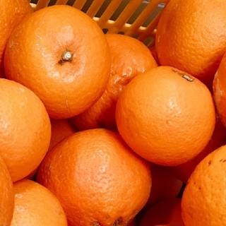 あゆみこ様専用 清見オレンジ在庫限り(フルーツ)