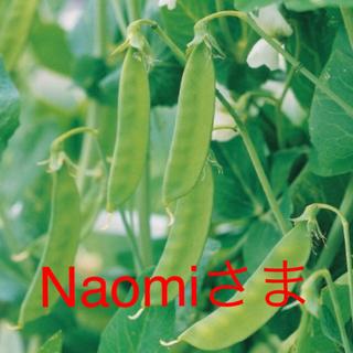naomi さま専用です 選べる 野菜の種 5種類(野菜)