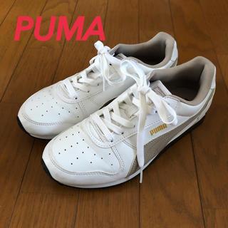 PUMA - PUMA❤️プーマ レディーススニーカー 24.5cm スポーツ ランニング