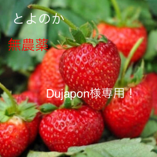 いちご苗3株 ネギ苗5本 Dujapon様専用!ネコポス(野菜)