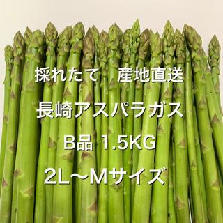 長崎産アスパラガス B品 1.5KG(野菜)