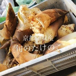 京都山城産☆どっさり新鮮たけのこ 10kg(野菜)