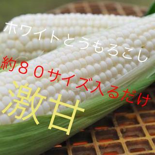 激甘高級ホワイトとうもろこし約80サイズ入るだけヤングコーン6月発送予定専用(野菜)