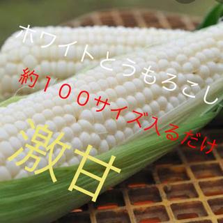 激甘高級ホワイトとうもろこし約100サイズ入るだけ6月発送予定(野菜)