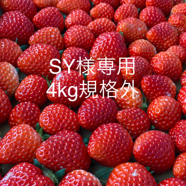 SY様専用●さがほのか規格外4kg●クール便 食品/飲料/酒の食品(フルーツ)の商品写真