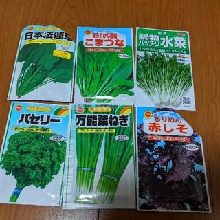 【野菜・ハーブ・花の種】6種類セット(野菜)