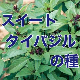 【アジアンテイスト‼️】スイート・タイバジルの種 30粒 野菜 タネ ハーブ(野菜)